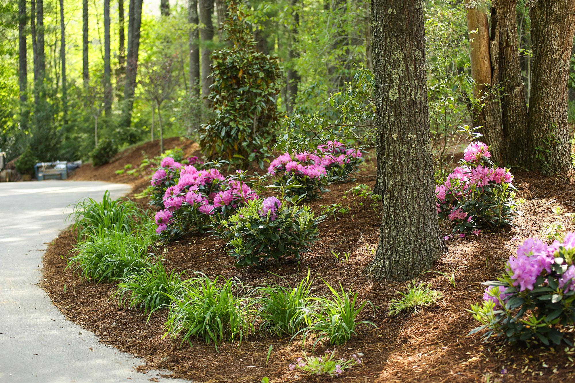 Mills Gap Landscape Design