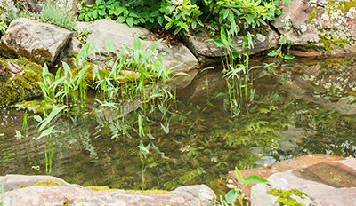 Landscaping Services; Irrigation and water features, ponds and waterfalls